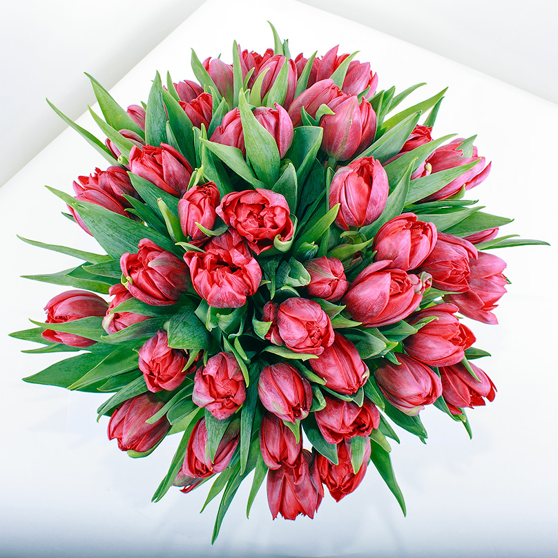 Фото 51 красный тюльпан