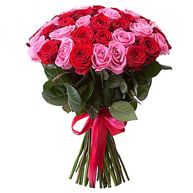51 красно-розовая роза