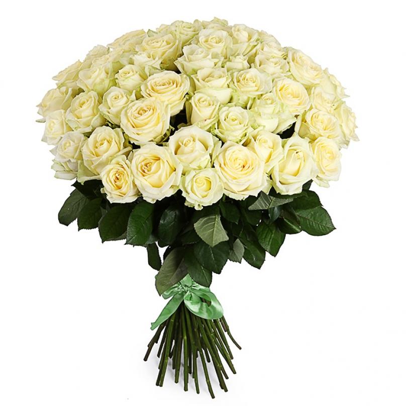 Фото 51 белая роза