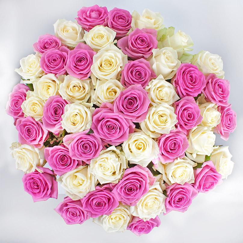 Фото 51 бело-розовая роза