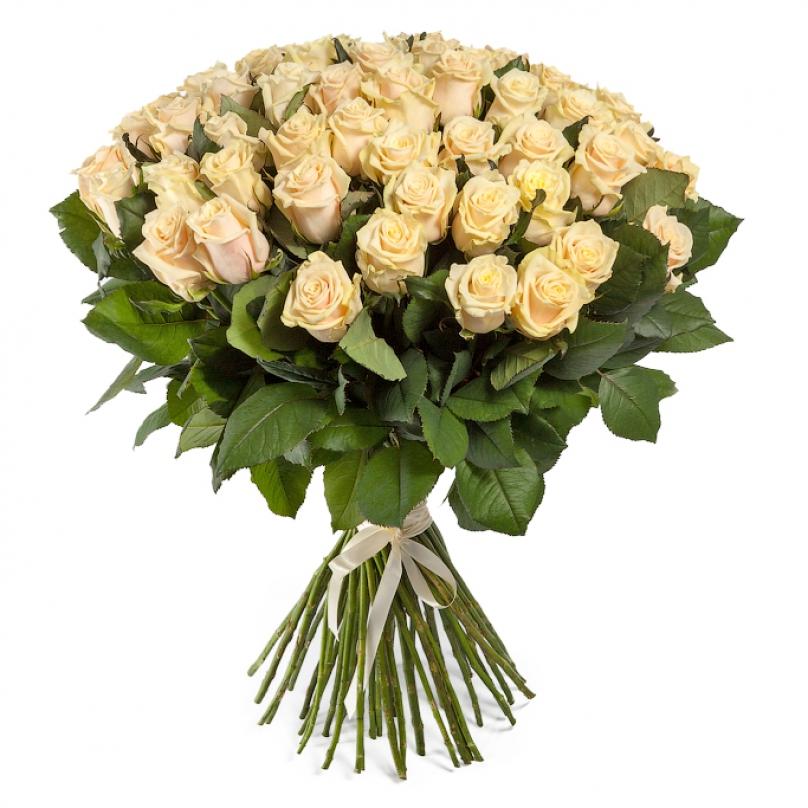 Фото 51 кремовая роза Талея