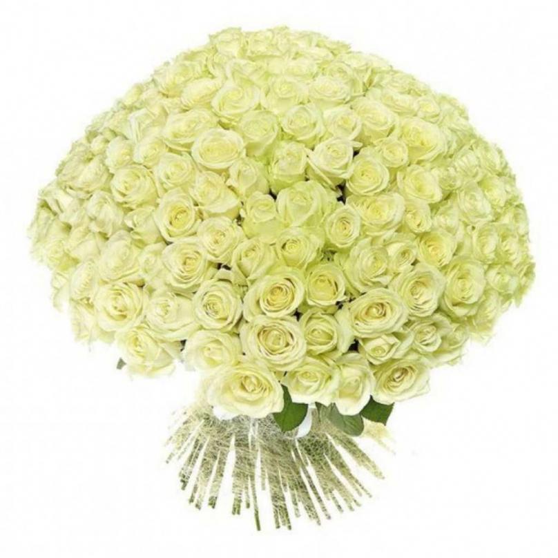 Фото 101 белая роза Аваланж