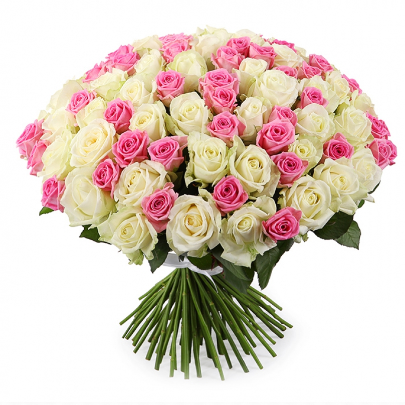 Фото 101 бело-розовая роза