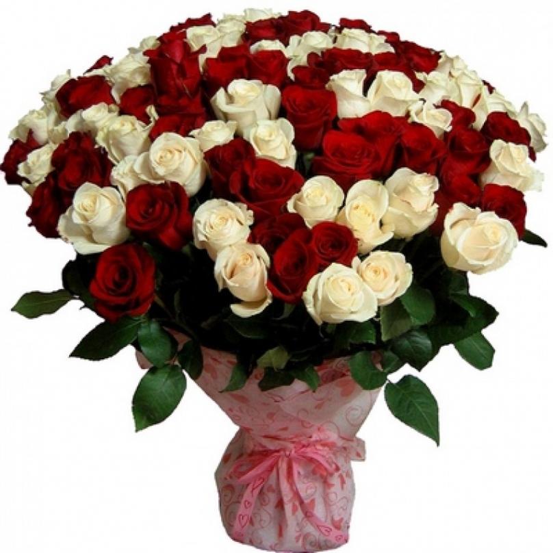 Фото 101 красно-белая роза