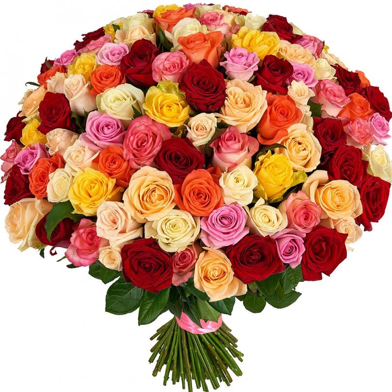 Фото 101 разноцветная роза