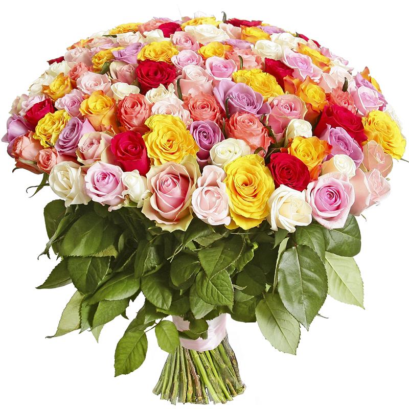Фото 201 разноцветная роза