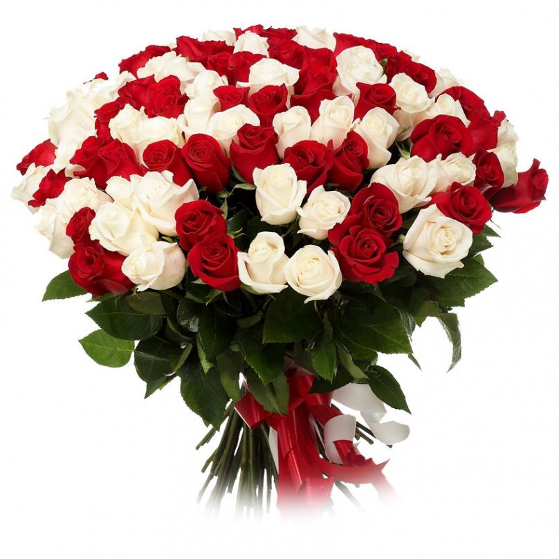 Фото 201 красно-белая роза
