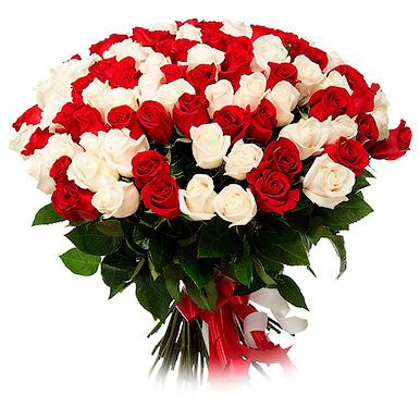 201 красно-белая роза