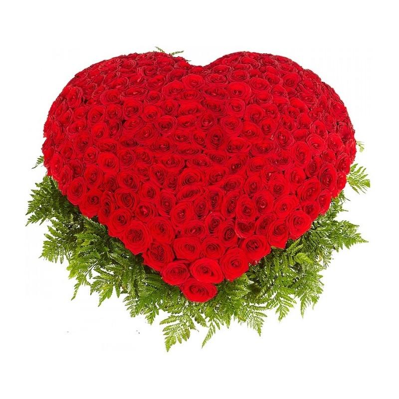 Фото 251 красная роза