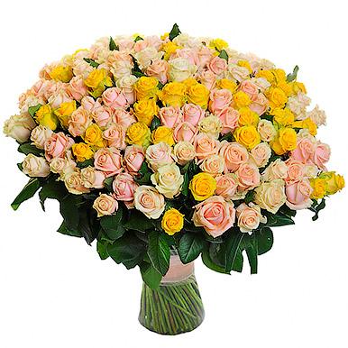 251 кремово-желтая роза
