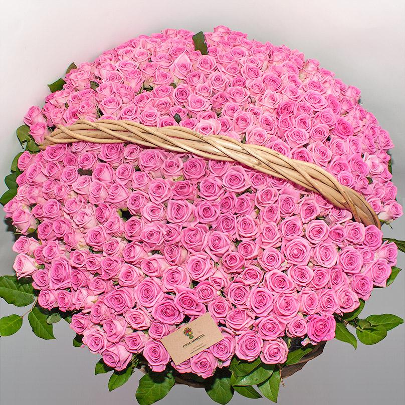 Фото 301 розовая роза