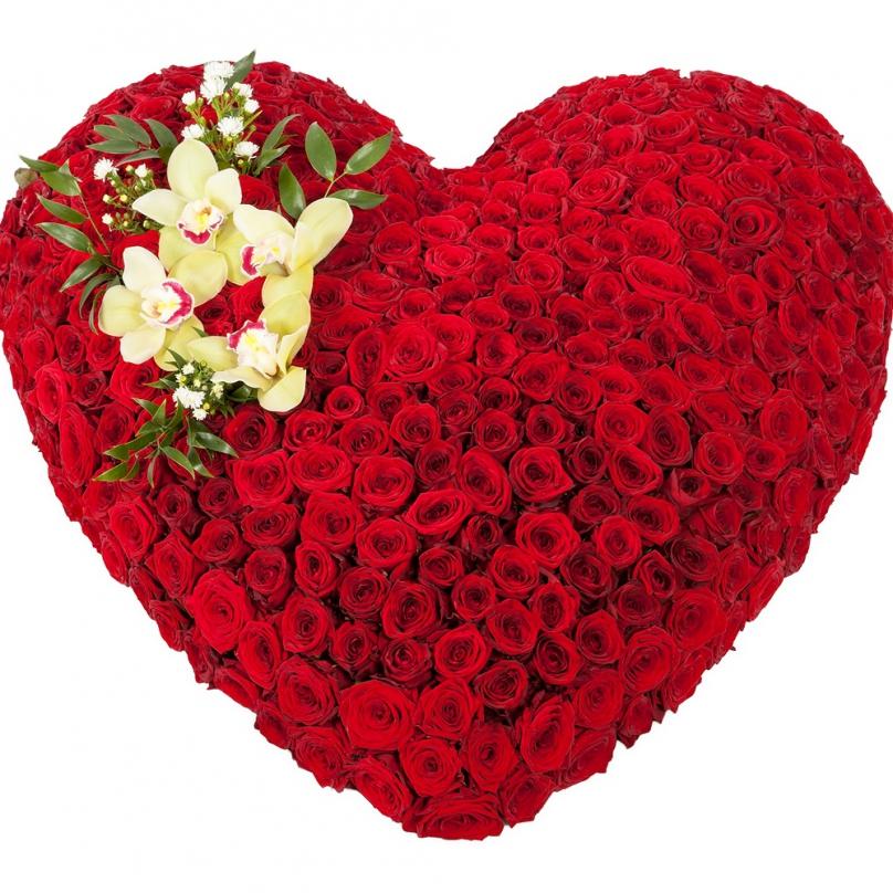 Фото 501 красная роза в форме сердца
