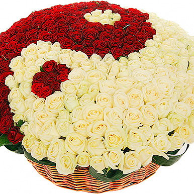 501 красно-белая роза