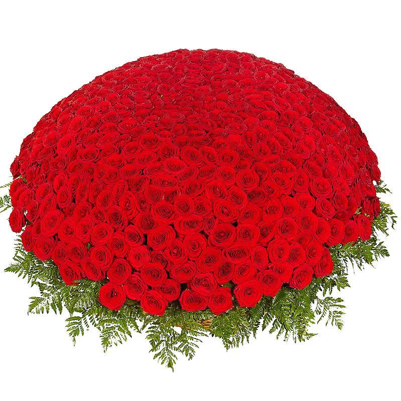 Фото 1001 красная роза