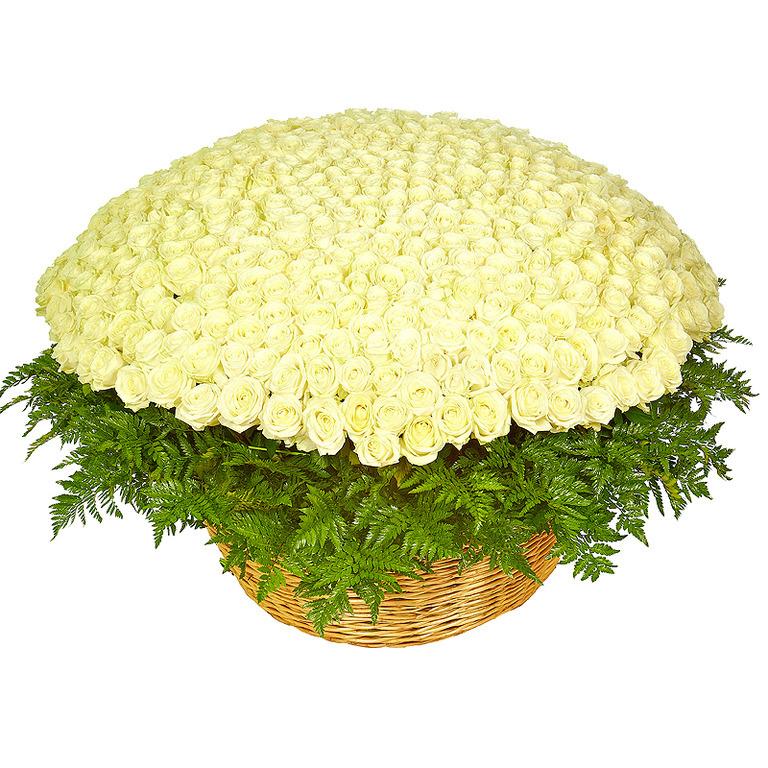 Фото 1001 белая роза