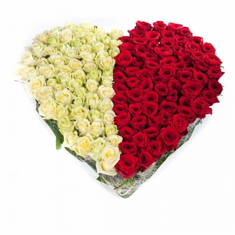 Фото 101 красно-белая роза в форме сердца