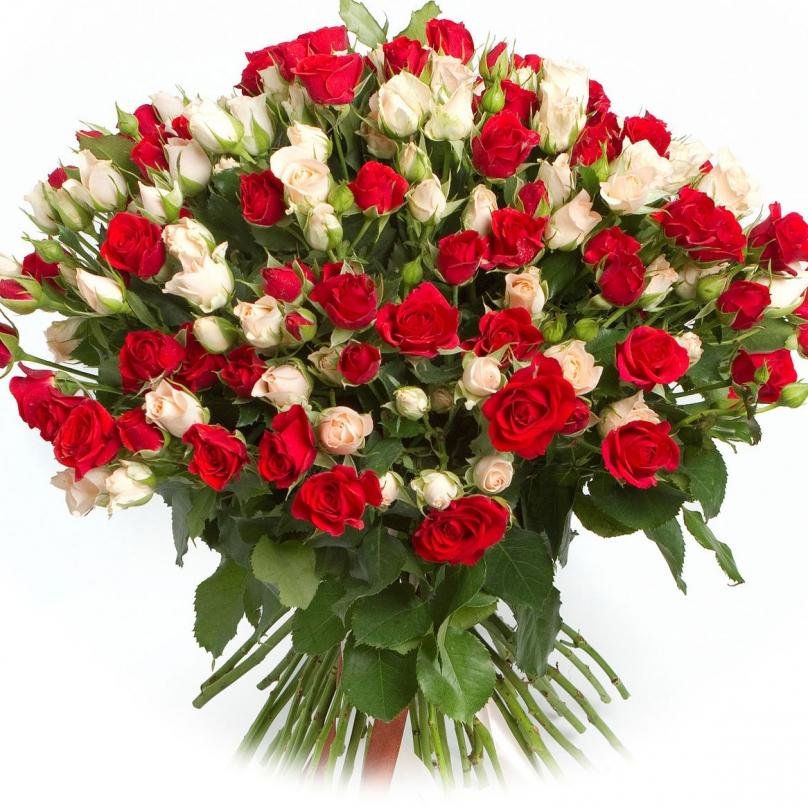 Фото 51 кремово-красная кустовая роза