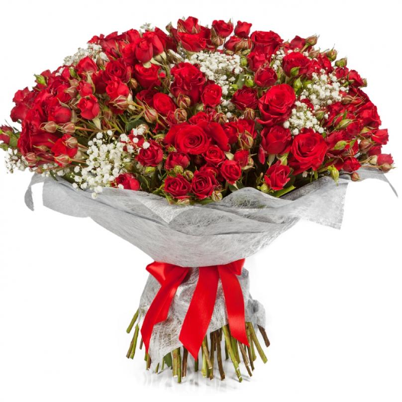 Фото 51 красная кустовая роза