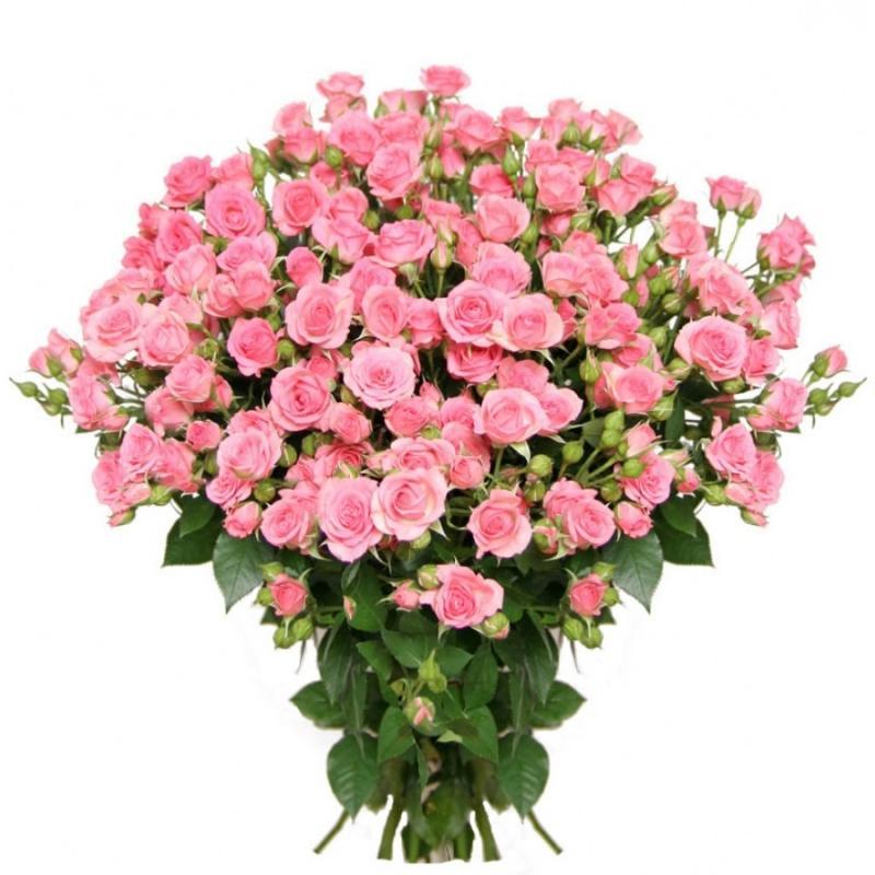 Фото 25 кустовых розовых роз