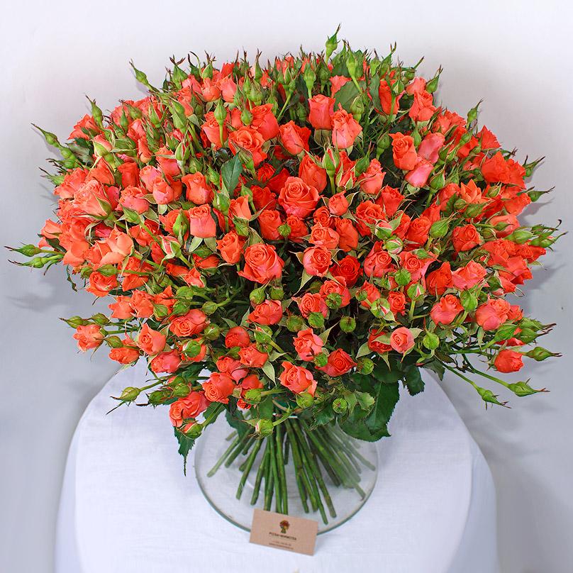 Фото 55 оранжевых кустовых роз