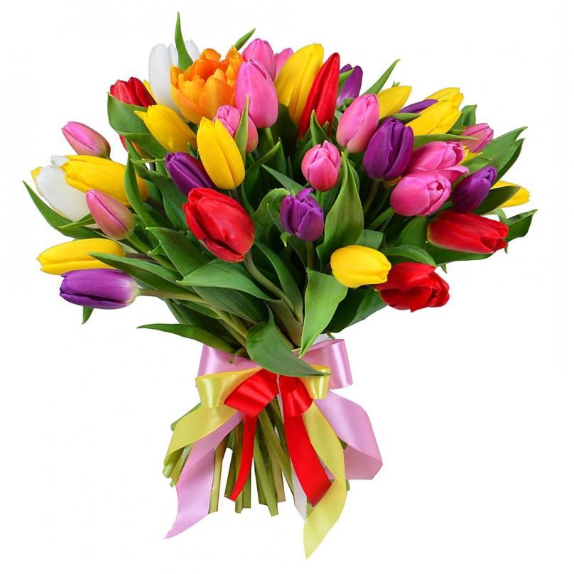 Фото 35 тюльпанов микс
