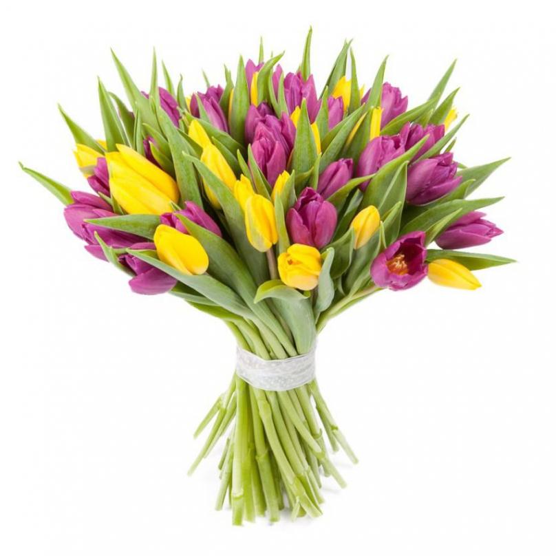 Фото 45 желто-сиреневых тюльпанов