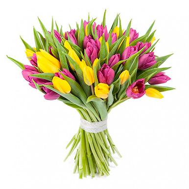 45 желто-сиреневых тюльпанов