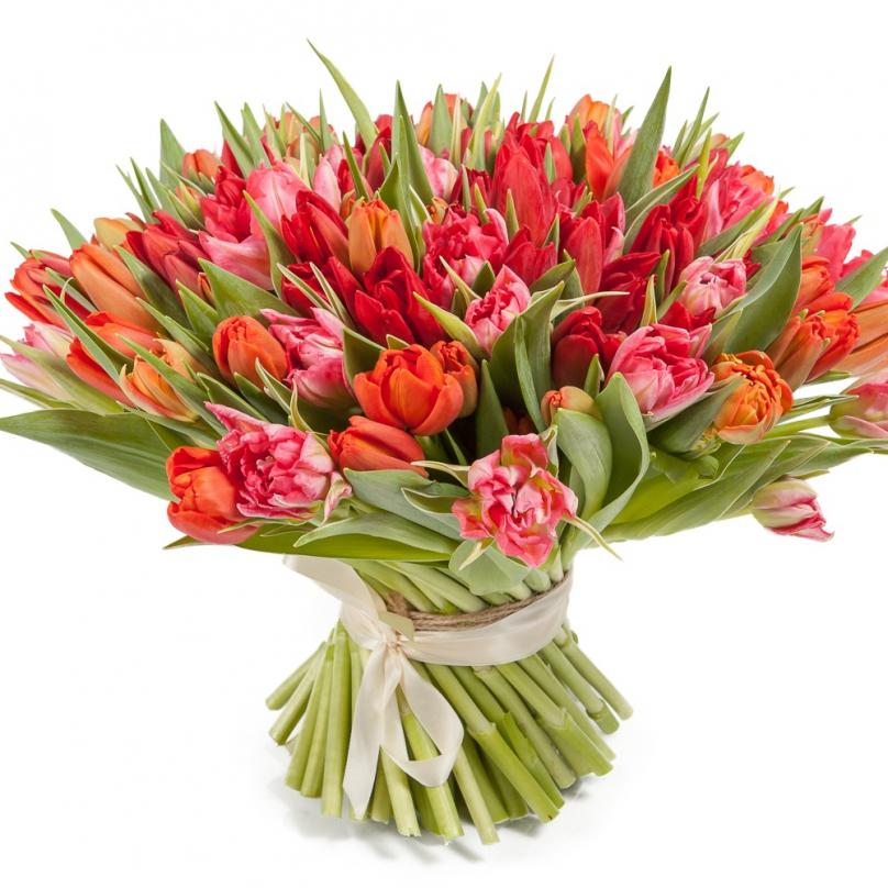 Фото Букет из 101 красно-оранжевого тюльпана