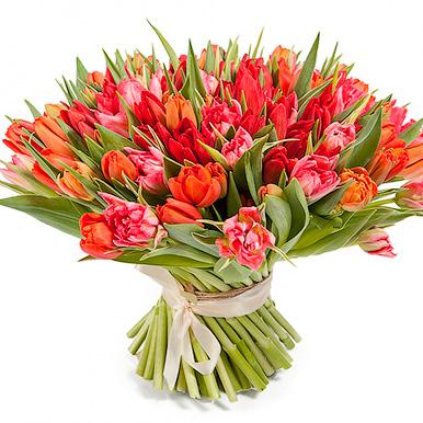 Букет из 101 красно-оранжевого тюльпана
