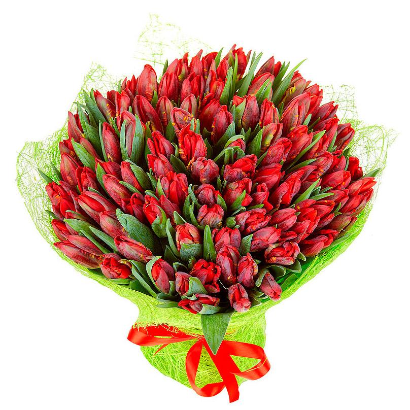 Фото 151 красный тюльпан