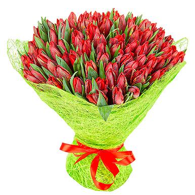151 красный тюльпан