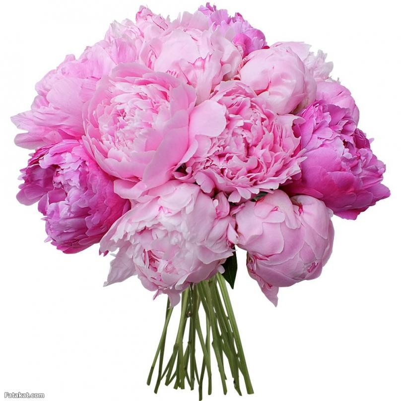 Фото 15 розовых пионов