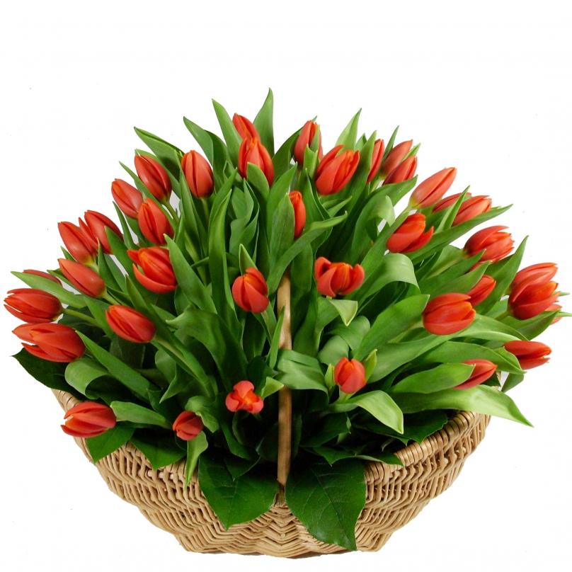 Фото 51 красный тюльпан в корзине