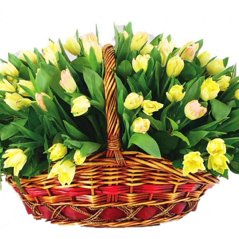 Фото 101 желтый тюльпан в корзине