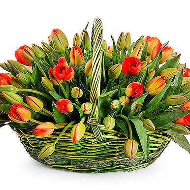 51 оранжевый тюльпан в корзине