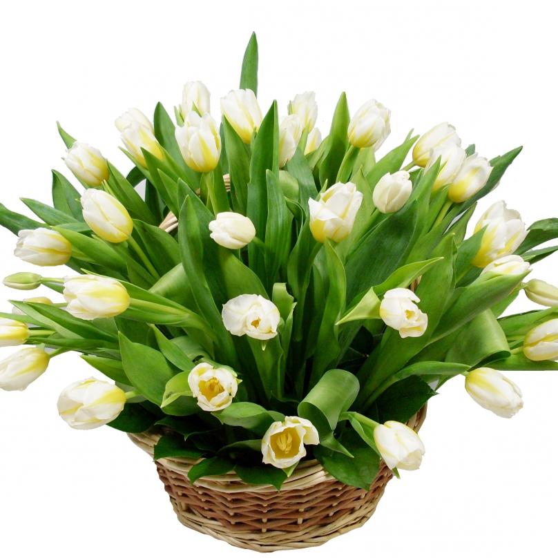 Фото 35 белых тюльпанов в корзине