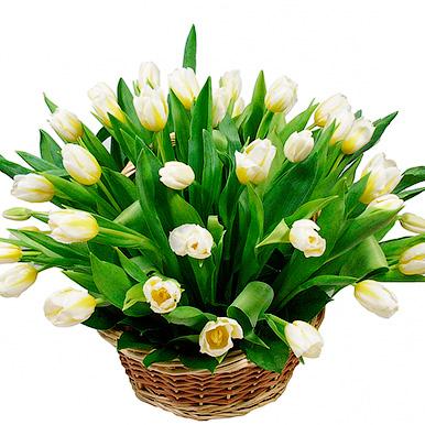 35 белых тюльпанов в корзине