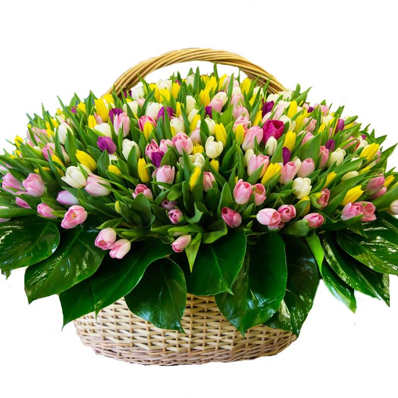 Открытки тюльпаны в корзине