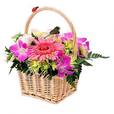 Мини корзинка с герберой и орхидеей