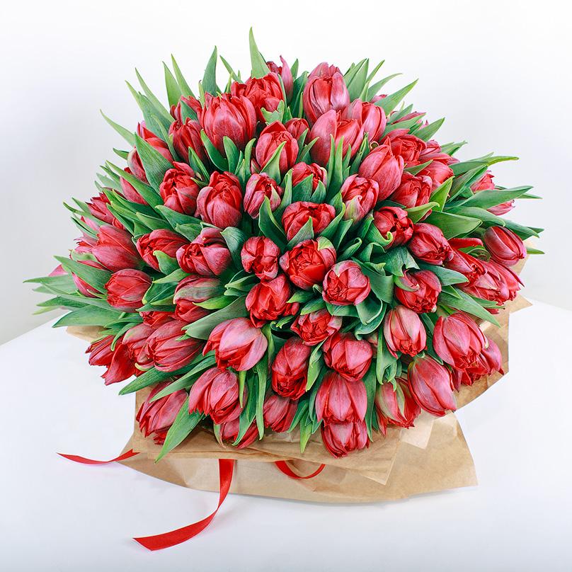 Фото 101 красный тюльпан