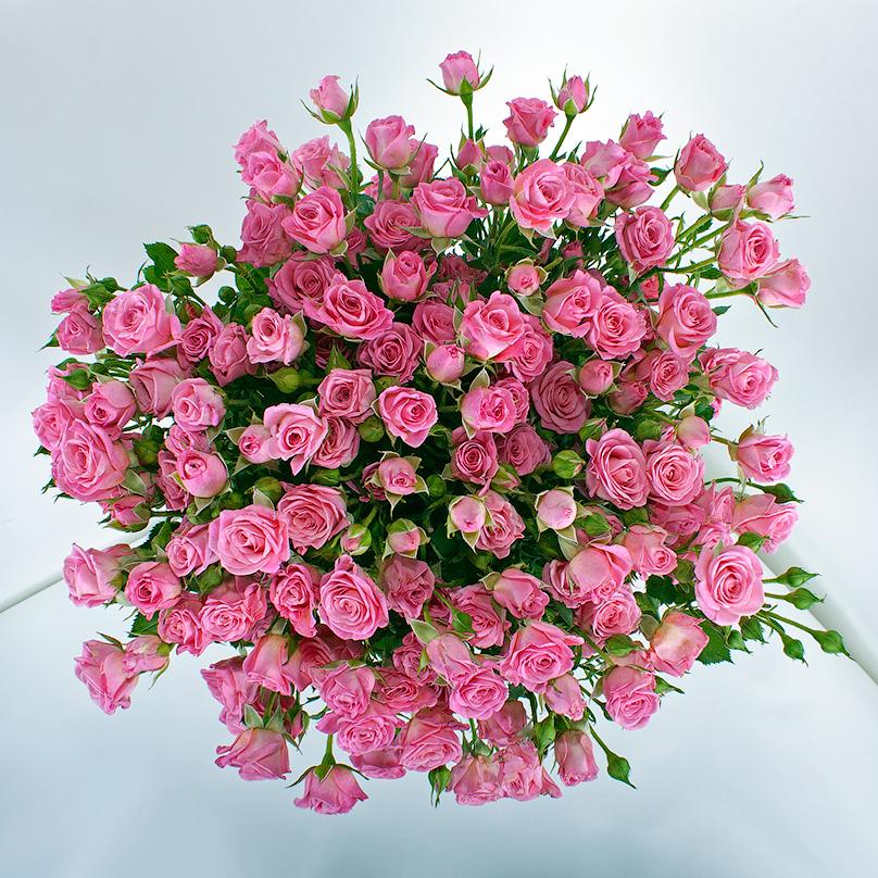 Кустовые розы открытки