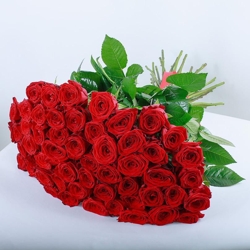 Фото 51 красная роза «Ред Наоми»