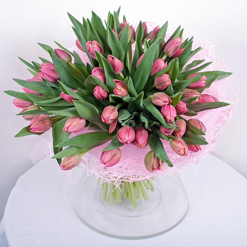 Фото 49 розовых тюльпанов