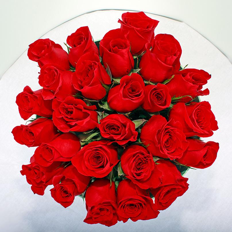 Фото Красная Эквадорская роза в круглой коробке