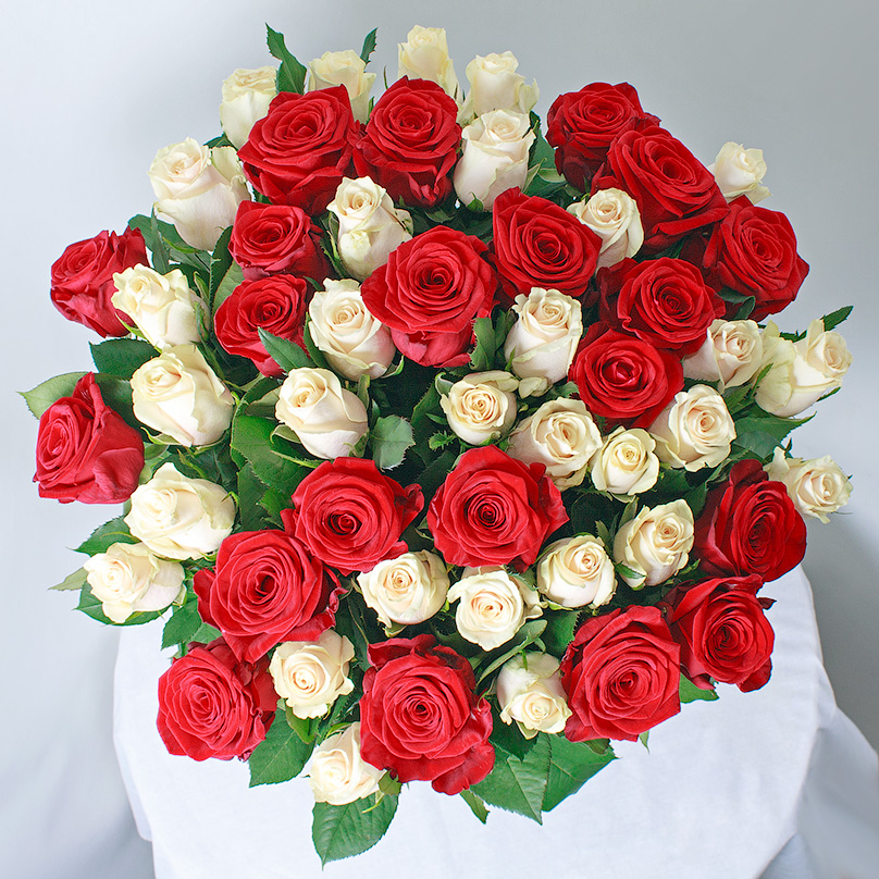 Фото 51 красно-белая роза