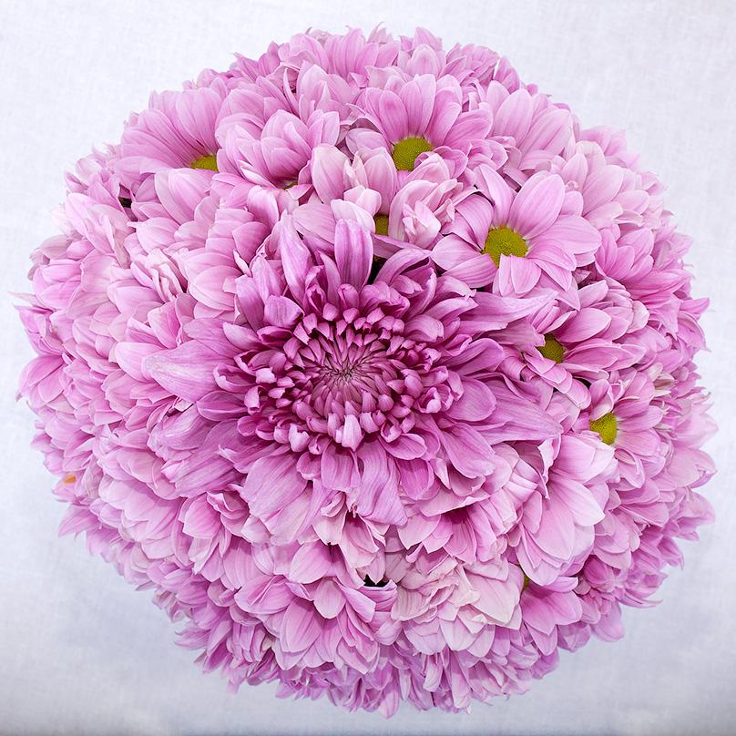 Фото Розовые хризантемы в коробке