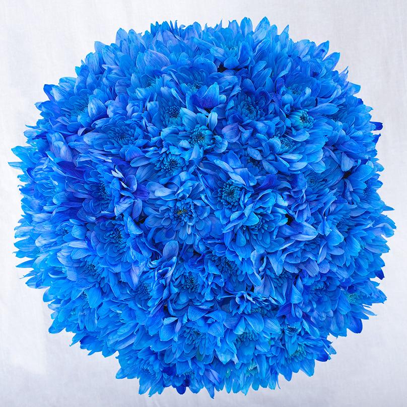 Фото Мини-коробка с синими хризантемами