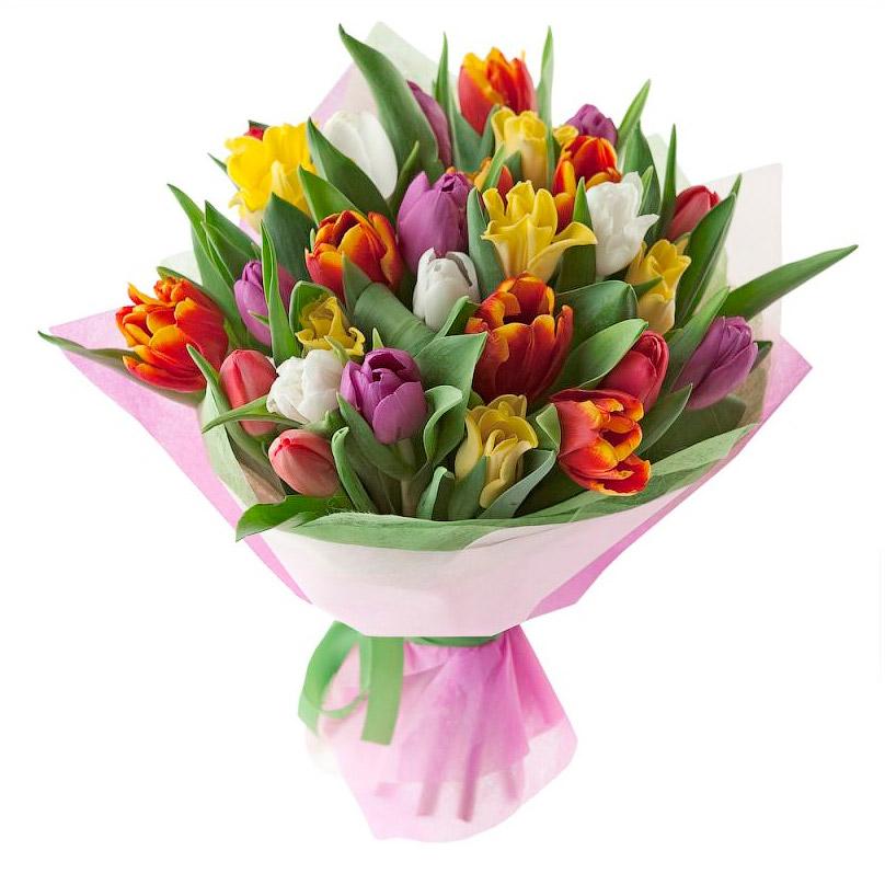 Фото Разноцветные тюльпаны