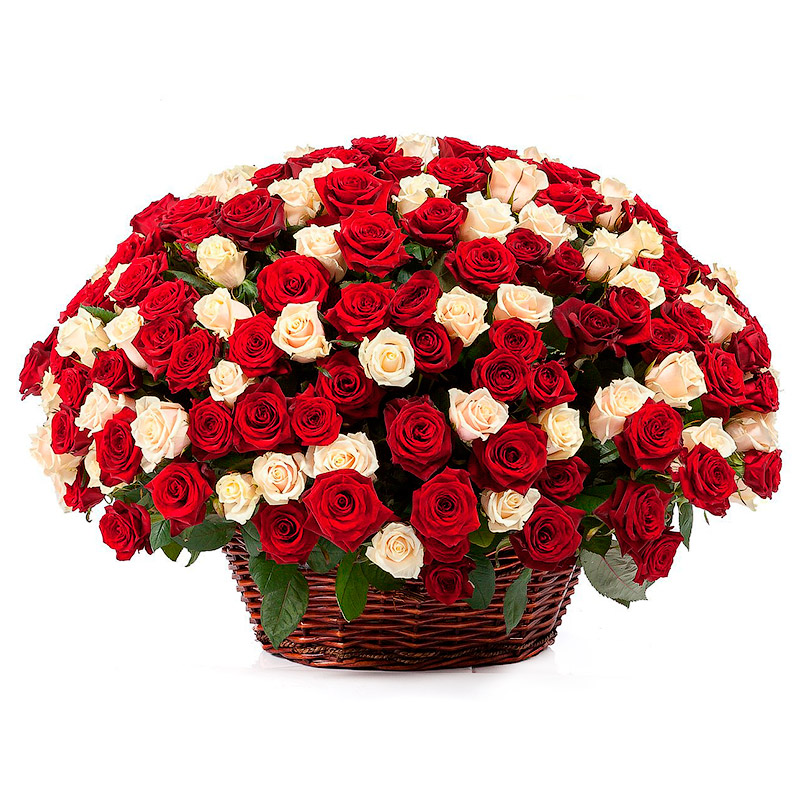Фото 251 кремовая и красная роза в корзине
