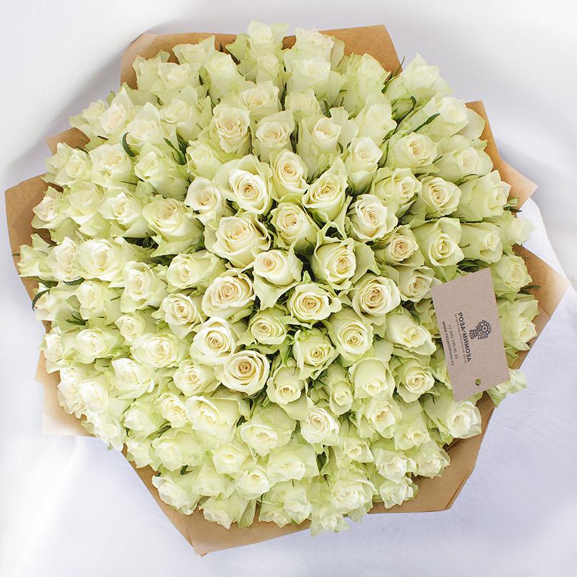 Фото 111 белых роз